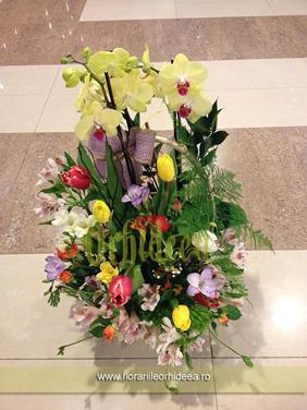Cos orhidee, frezii, lalele