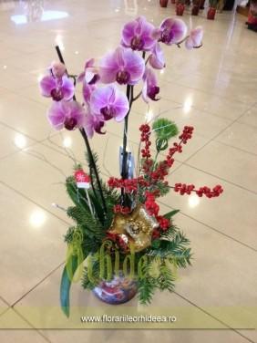 Orhidee phalaenopsis de Craciun