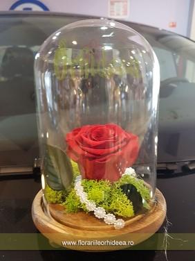 Trandafir criogenat in dom de sticla